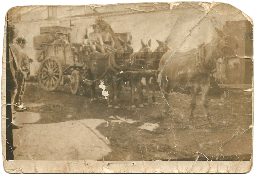 história negócio familiar Olicepa